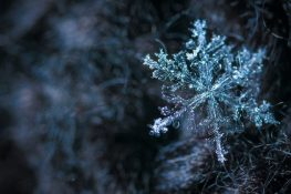 The Snowflake Approach To Better Health